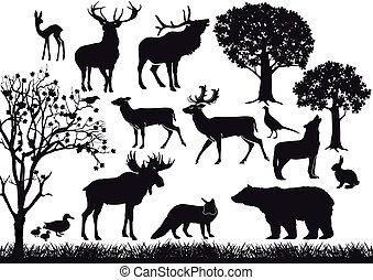 fauna, foresta