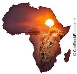 fauna, mappa, africano