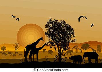 fauna, silhouette, safari, animale