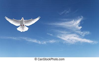 fede, cielo, simbolo, blu, colomba, bianco
