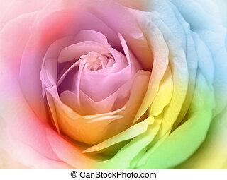 fine, multicolor, rosa, bello