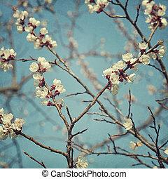 fiore, albicocca, fiori