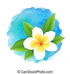 fiore blu, frangipani, acquarello, vettore, fondo