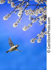 fiore blu, volare, cielo, fondo, uccello bianco
