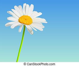 fiore, camomilla, natura, fondo., vettore, fiore