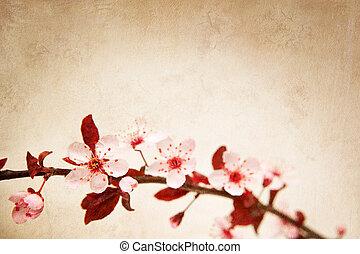 fiore, ciliegia, fondo