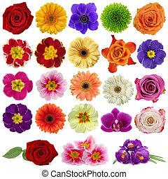 fiore, collezione