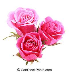 fiore dentellare, mazzolino, rosa, isolato, fondo, bianco, disinserimento