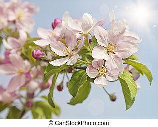 fiore, fiori, pesca
