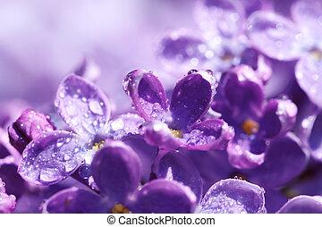 fiore, fiori primaverili, lilla