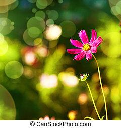 fiore, fondo, viola, naturale