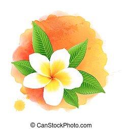 fiore, frangipani, acquarello, vettore, fondo, arancia