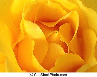 fiore, giallo