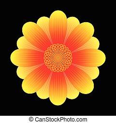 fiore, girasole, astratto
