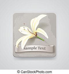 fiore, illustrazione, realistico, vettore, icon., giglio