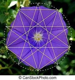 fiore, modelli, natura, geometria