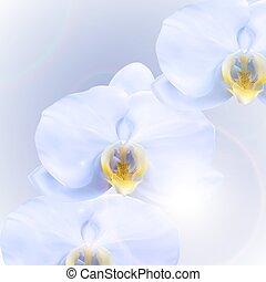 fiore, orchidea, illustrazione, 3d, realistico, fondo., vettore