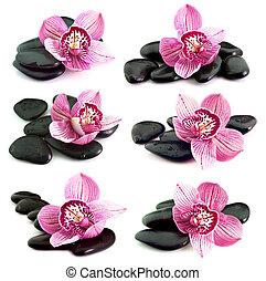 fiore, orchidea, pietre