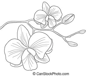 fiore, orchidea