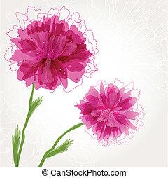 fiore, peonia