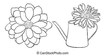 fiore, set, girasole, irrigazione, mano, dalia, disegnato, lattina, vettore, illustrazioni