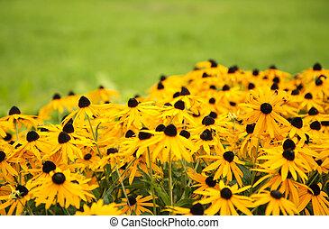 fiore, sfondo verde, giallo