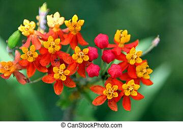fiore, vibrante, tropicale, gruppo, colori, azzurramento