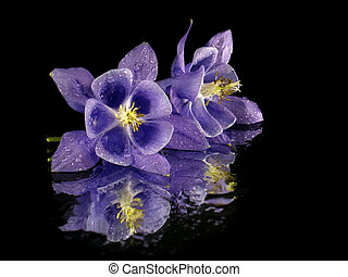 fiore, viola