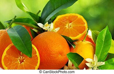 fiori arancia, frutte