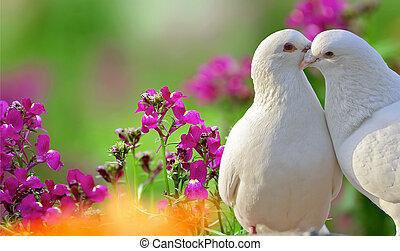 fiori, colombe, due, amare, viola, bello, bianco
