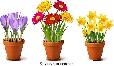 fiori, colorito, primavera, otri