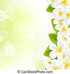 fiori, frangipani, foglia