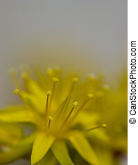 fiori, natura