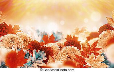 fiori, oak., foglie, autunno, chrysanthemums., fondo, yellowed, acero