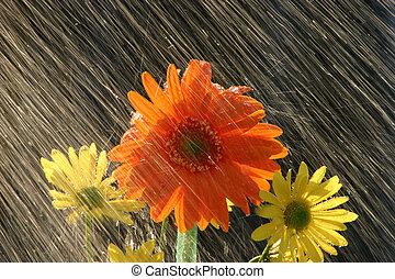 fiori, pioggia