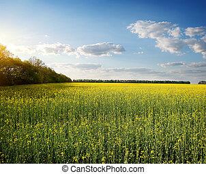 fiori, prato, giallo