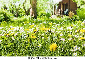 fiori, prato, giardino