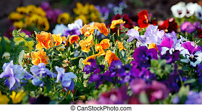 fiori, variopinto, viola