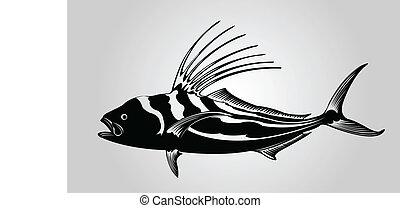 fish., gallo
