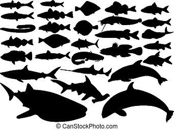 fish, set, vettore