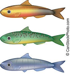 fish, vettore, colorito, illustrazione