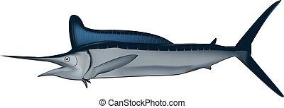 fish, vettore, illustrazione, marlin