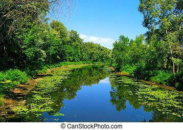 fiume, alberi verdi