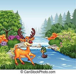 fiume, cervo, cartone animato, banca