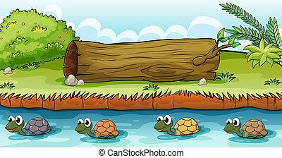fiume, tartarughe