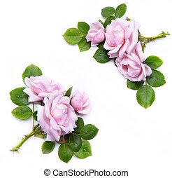 floreale, fondo, astratto, isolato, cornice, bianco