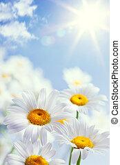 floreale, vendemmia, astratto, fondo, estate
