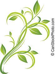 floreale, verde, disegno