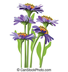 floreale, viola, vettore, aster, disegno