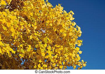 fogli azzurro, cielo, giallo
